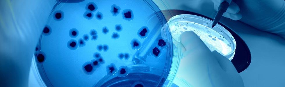 細胞実験イメージ画像